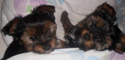 Lucy i Kisielek - właściciel Wiktoria