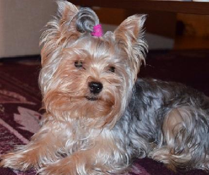 Mimi (16 miesięcy) - właścicielka Klaudia