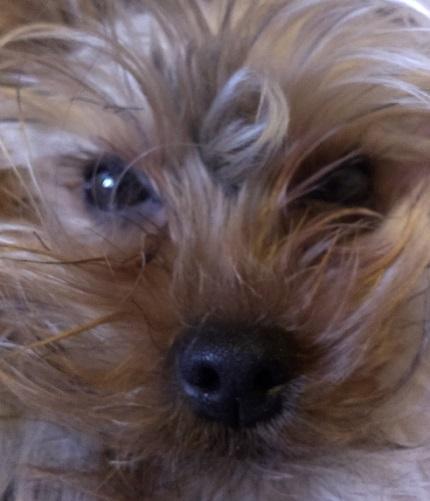 Roxi to straszna pieszczocha - zdjęcie nie dotyczy treści.