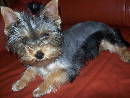 Amy (11 miesięcy) - właściciel Jola