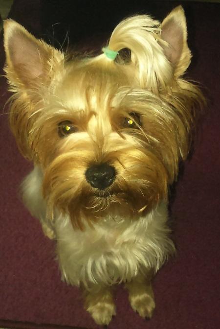 Sisi (18 miesięcy) - właściciel Dorota
