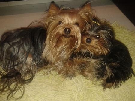 Tosia (5 miesięcy) i Maja (2 lata) -  właścicielka MONIKA